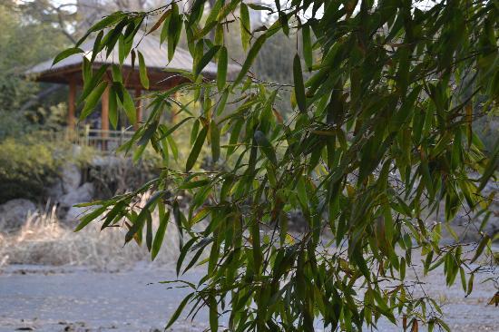 Zizhuyuan Gongyuan (Black Bamboo Park) : 静柳雅枝