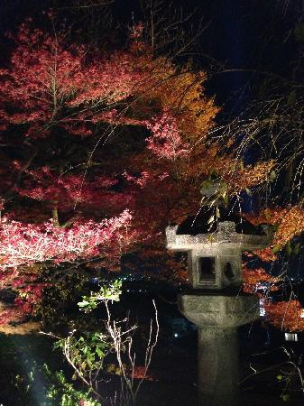 Kiyomizu-dera Temple: 夜枫