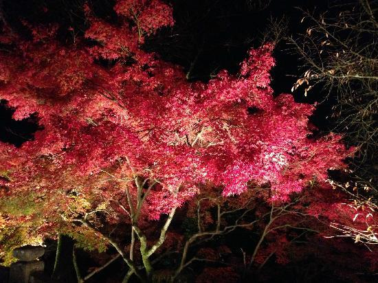 Kiyomizu-dera Temple: 夜晚枫叶太妖娆