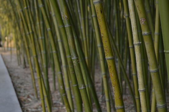 Zizhuyuan Gongyuan (Black Bamboo Park): 青竹