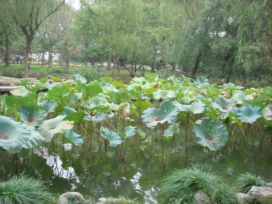 Shen Yuan (Shen Garden): 1