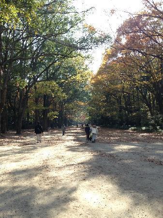Shimogamo Jinja: 舒服的森林
