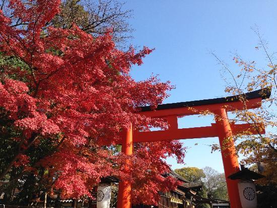 Shimogamo Jinja: 神社侧门的红叶正红