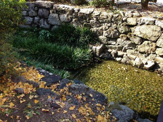 Shimogamo Jinja: 很干净的小水渠