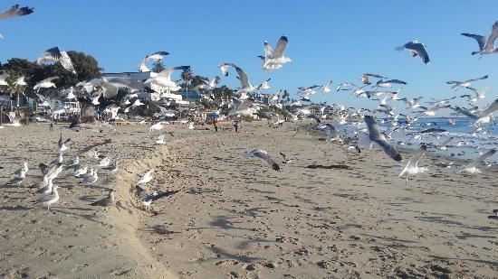 Laguna Beach : luguna海滩