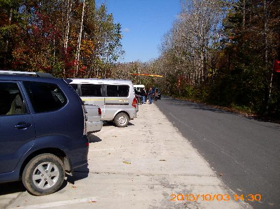 Huadian, China: 静静的白桦林拍摄地(森林氧吧)