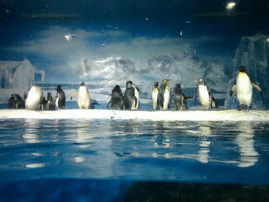Ji Di Guan - Pole Aquarium.: 企鹅