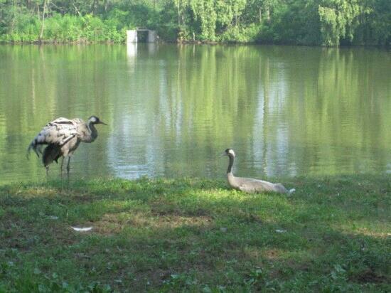 Qinghuang Island Wildlife park: 动物园