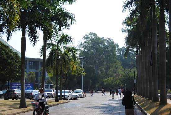 Xiamen University: 厦门大学