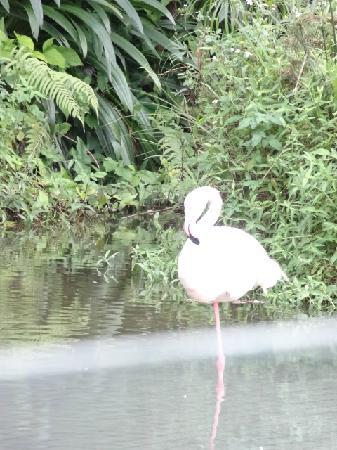Badaling Wildlife Park: 1