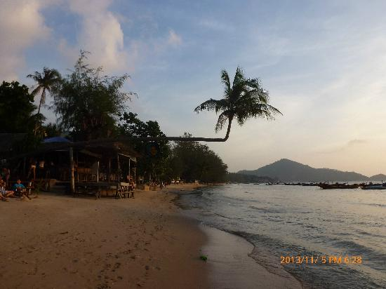 Sairee star travel: 奇怪的椰子树