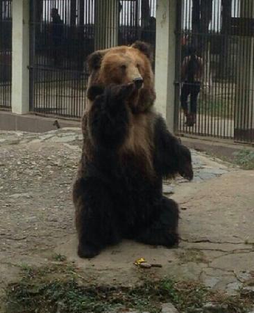 Wuhan Zoo: 第一次看到黑熊,突然想到熊出没!