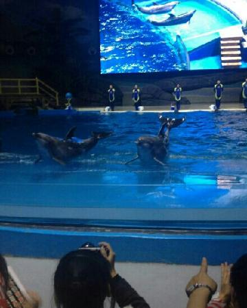 Polar Ocean World Wuhan
