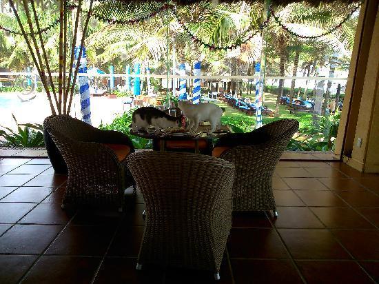 Pandanus Resort: 临海餐厅