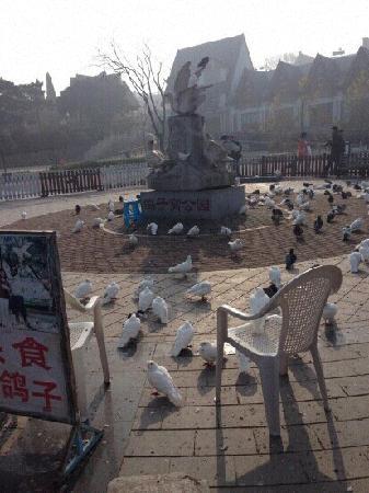 Pigeon Nest Park: 鸽子