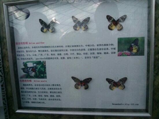 Zhengzhou Butterfly Island Scenic Spot
