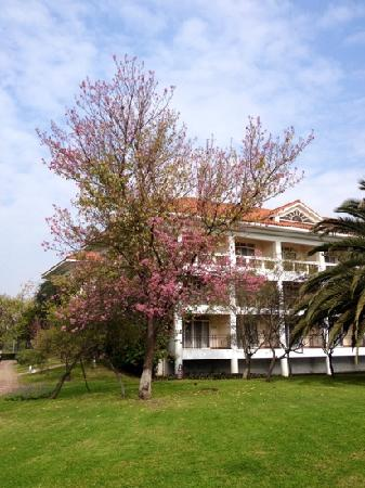 Dianchi Garden Hotel & Spa : 滇池温泉酒店