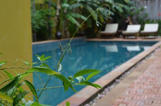 Golden Mango Inn : 酒店外观