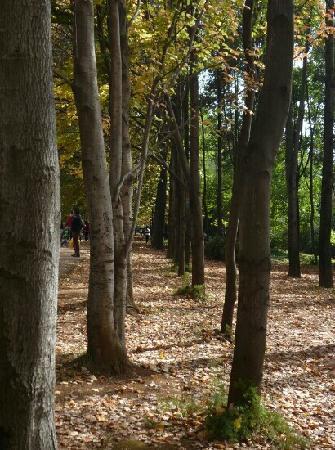 Kunming Botanical Garden: 植物园的秋天