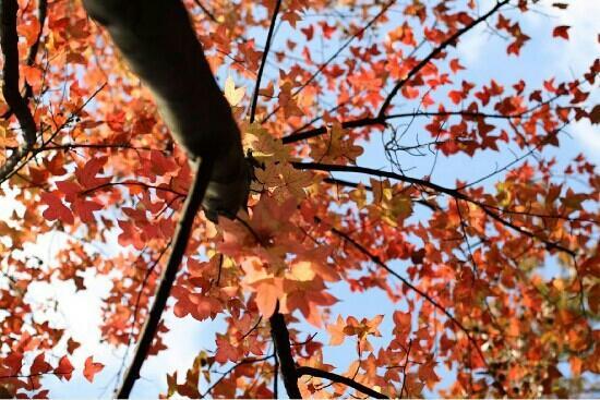 Kunming Botanical Garden: 红色的