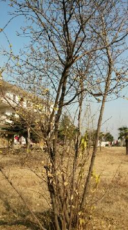 Xiaochang County, China: 腊梅开了,春天来了