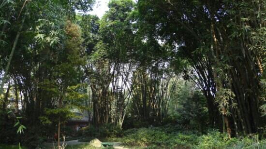 Wangjianglou Park: 竹林