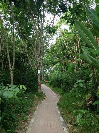 Shari-La Island Resort: 通往另一半沙滩的小道
