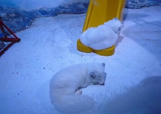 Harbin Polarland: 0