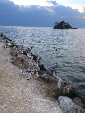 Little Putuo Island: 海鸥