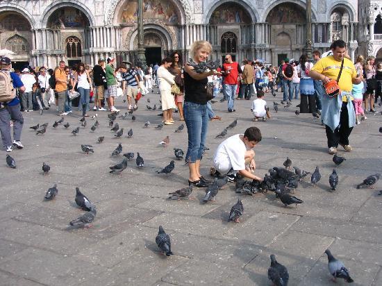 Piazza San Marco (Plaza de San Marcos): 圣马可广场
