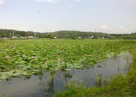 Shenyang Dongling Park : 景色