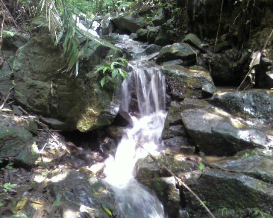 Golden Whip Brook: 1
