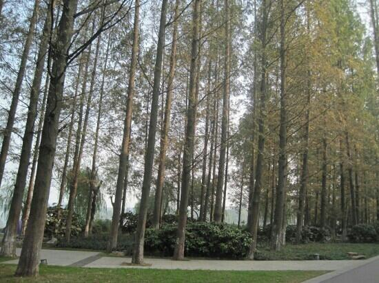 zong jiao lu kang: 龙王滩公园的参天大树
