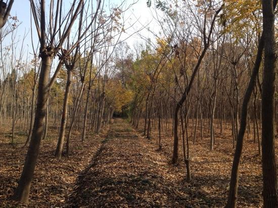 Hefei Botanical Garden: 植物园