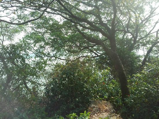 Nanshan Botanical Garden : 1