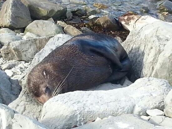 Colonia de focas: 萌
