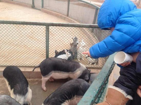 Chongqing Zoo (Chongqing Dongwuyuan): 可爱的小动物