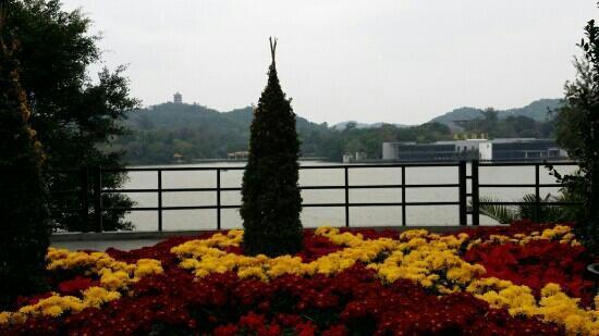 Luhu Park: 春节花坛