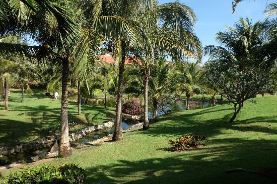 Pandanus Resort: 椰树