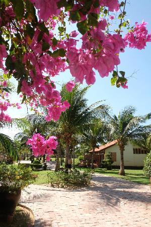 Pandanus Resort: 美丽的三角梅