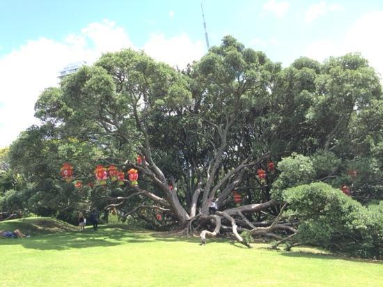 Auckland Domain: 公园一角