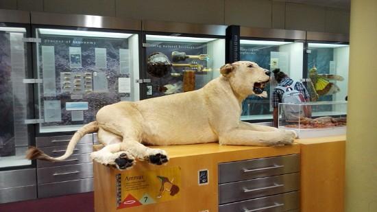 Western Australian Museum - Perth: 西澳博物馆