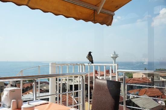 Blue Tuana Hotel: view