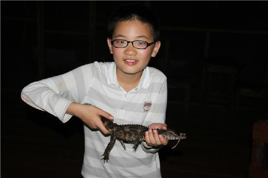 MarinAmazonica: alligator
