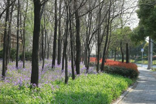 Sheshan Forest Park: 花和树