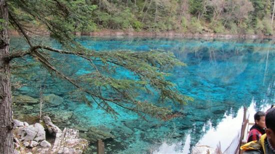 Jiuzhaigou Natural Reserve: 清澈见底