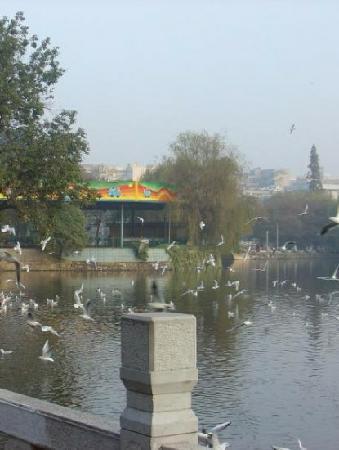 Green Lake (Cui Hu): 鸟
