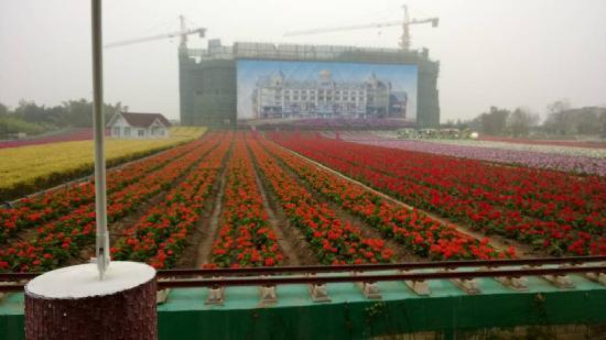 Sunflower Garden: 花海