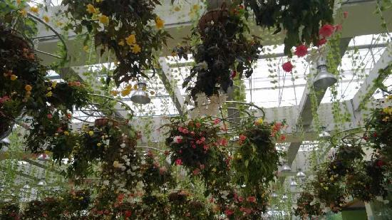Sunflower Garden: 温室