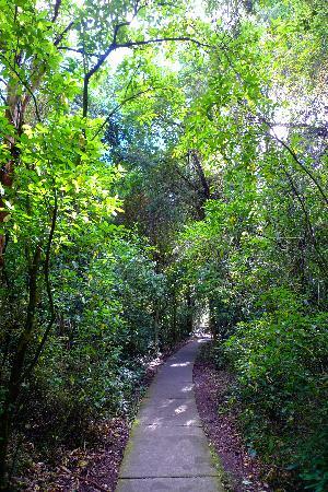 Riccarton House & Bush: 原始森林